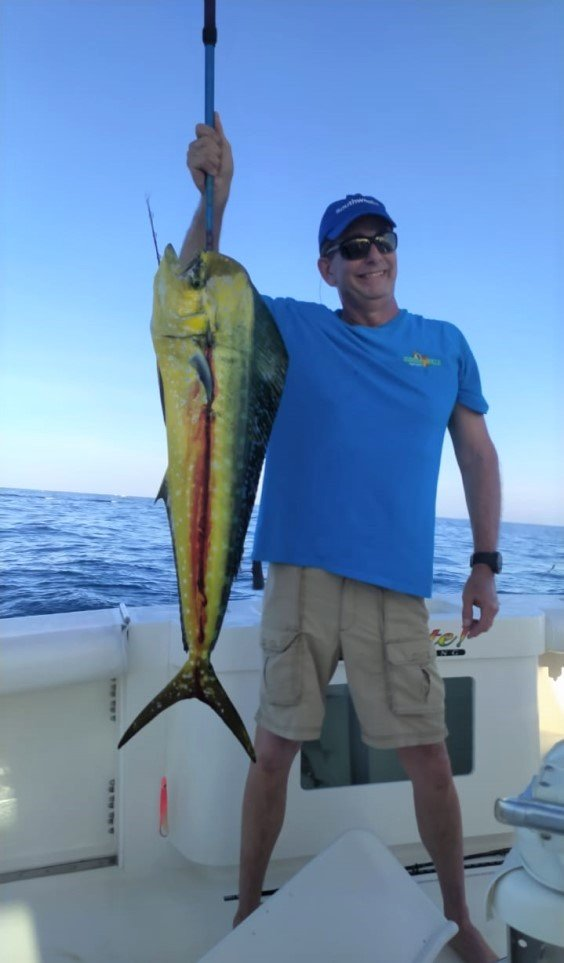 Most Dorado (Mahi) are caught with trolling lures and live bait
